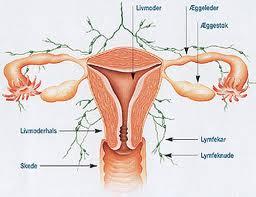 operera bort äggstockar och livmoder